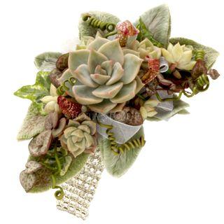 Wrist-Corsage-Succulents